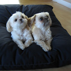 Denim Covered Wool Fill Pet Beds