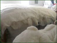 Pure ECO-Pure wool for making mattress toppers