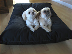 2 little dogs on their pet bed